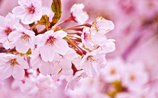 10 Bunga Tercantik Di Dunia Permana S